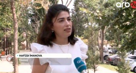 Hafizə İmanova